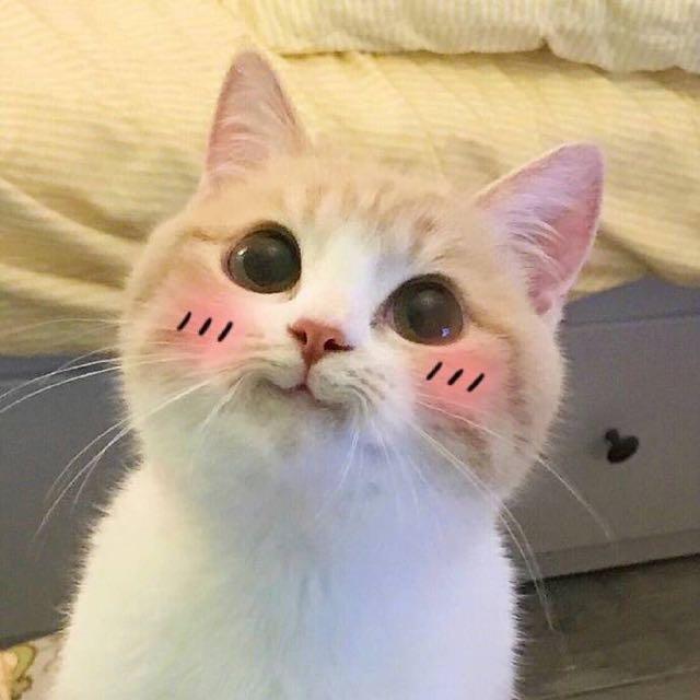 李徒小猫雅乱斗偶遇聚源一哥?