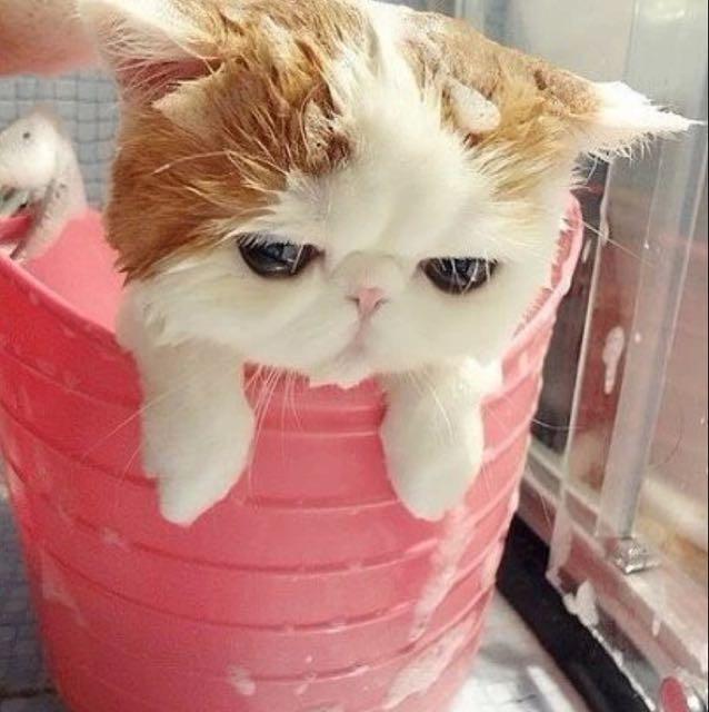 加菲猫 喵tua~的回放