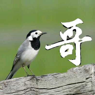 壁纸 动物 鸟 鸟类 雀 392_392