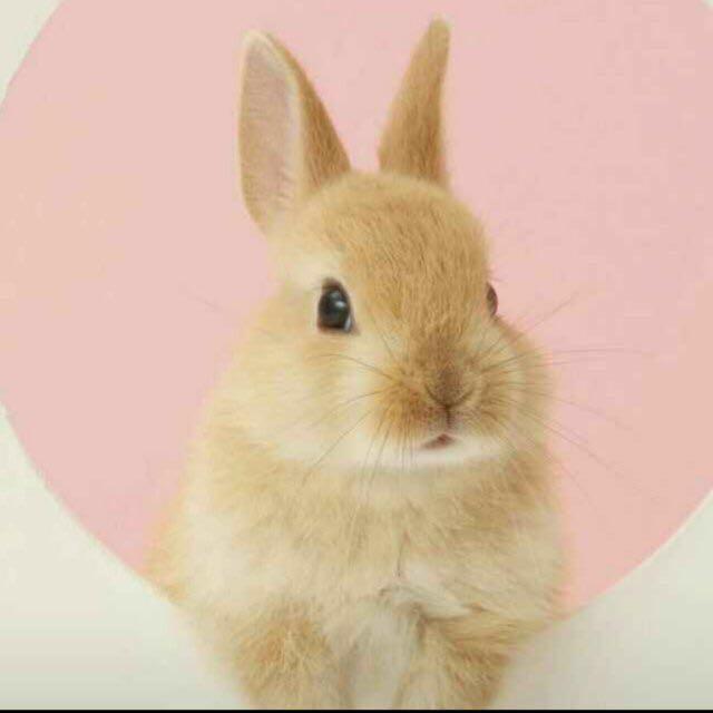 小白兔视频直播全集_小白兔资料大全-YY官方