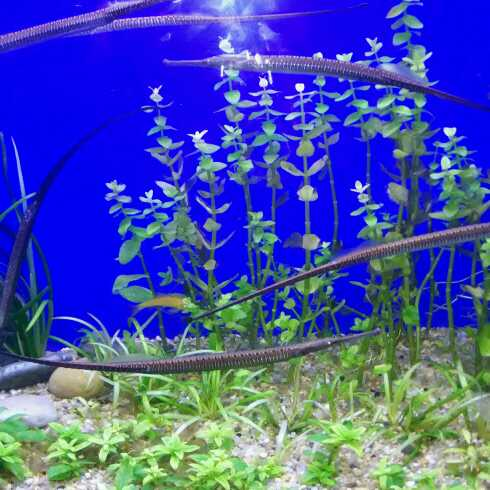 壁纸 海底 海底世界 海洋馆 水族馆 490_490