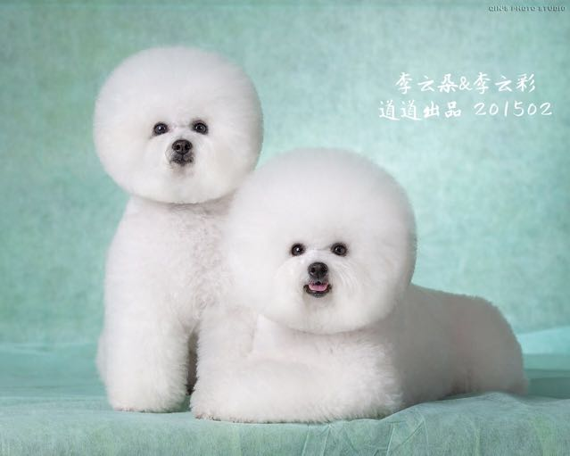 《百万名犬》 狗语者-道道🐶